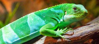 Australian Reptile Park Tickets Thumbnail 1