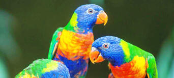 Australian Reptile Park Tickets Thumbnail 4
