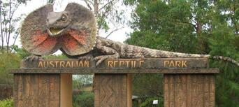 Australian Reptile Park Tickets Thumbnail 5