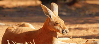Australian Reptile Park Tickets Thumbnail 6