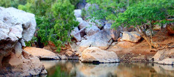 Windjana Gorge and Tunnel Creek Tour Thumbnail 5