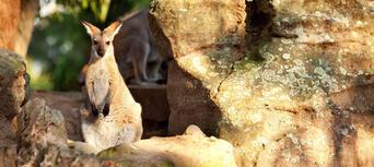 Taronga Zoo Entry including Sky Safari Cable Car and Ferry Pass Thumbnail 2