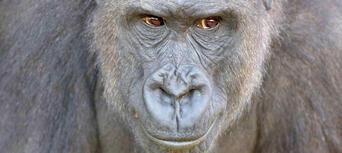 Taronga Zoo Entry including Sky Safari Cable Car and Ferry Pass Thumbnail 3