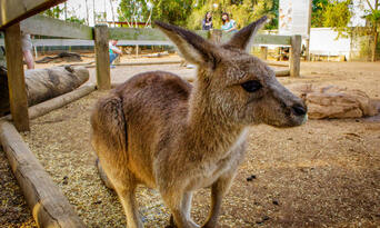 Blue Mountains, Cruise & Wildlife Park Tour from Sydney Thumbnail 4