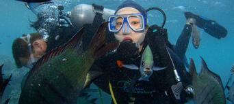 Whitsundays Overnight Reef Tour from Hamilton Island Thumbnail 2