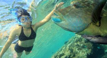 Whitsundays Overnight Reef Tour from Hamilton Island Thumbnail 1