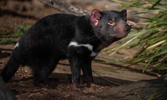 Bonorong Wildlife Sanctuary Tickets Thumbnail 3