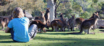 Bonorong Wildlife Sanctuary Tickets Thumbnail 4