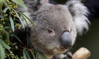 Bonorong Wildlife Sanctuary Tickets Thumbnail 6