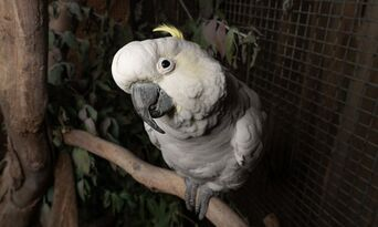 Exclusive Night Tours Bonorong Wildlife Sanctuary Thumbnail 3