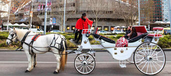 Melbourne Horse and Carriage Tours Thumbnail 4