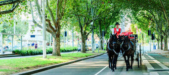 Melbourne Horse and Carriage Tours Thumbnail 6