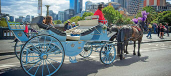Melbourne Horse and Carriage Tours Thumbnail 1