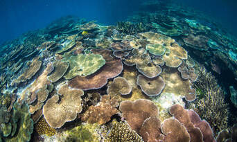 Museum Of Underwater Art And Great Barrier Reef Diving Day Trip Thumbnail 3