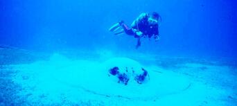 Yongala Wreck Dive Trip Thumbnail 3