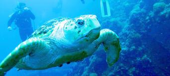 Yongala Wreck Dive Trip Thumbnail 4