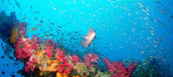 Yongala Wreck Dive Trip Thumbnail 5