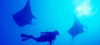 Yongala Wreck Dive Trip Thumbnail 6