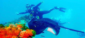 Yongala Wreck Dive Trip Thumbnail 1