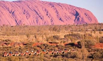 Uluru Express Camel Tours Thumbnail 1
