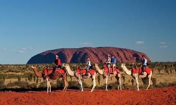 Uluru Express Camel Tours Thumbnail 6