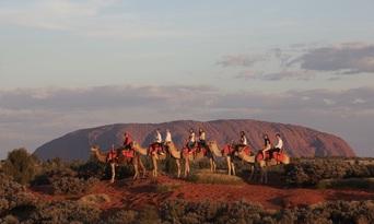 Uluru Sunset Camel Ride Tour Thumbnail 1