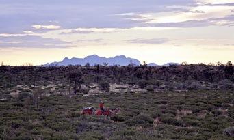 Uluru Sunset Camel Ride Tour Thumbnail 3
