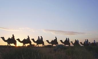Uluru Sunset Camel Ride Tour Thumbnail 4