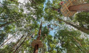 TreeTop Adventure Park Central Coast Thumbnail 5