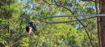 Newcastle Treetop Adventure Park Thumbnail 3