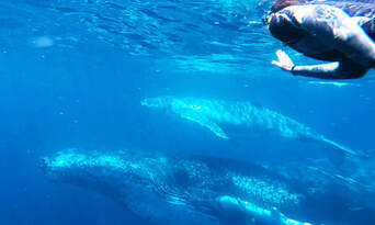 Swim with the Whales Tour from Mooloolaba Thumbnail 2