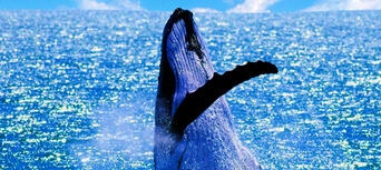 Small Group Whale Watching Tour from Mooloolaba Thumbnail 6