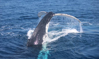 Small Group Whale Watching Tour from Mooloolaba Thumbnail 5