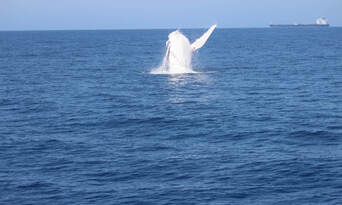 Small Group Whale Watching Tour from Mooloolaba Thumbnail 4
