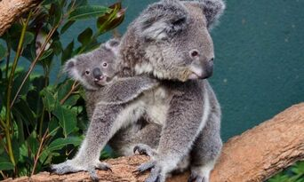 WILD LIFE Sydney Zoo Entry Tickets Thumbnail 3