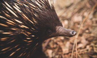 WILD LIFE Sydney Zoo Entry Tickets Thumbnail 5