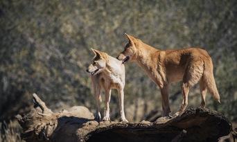 Alice Springs Desert Park Thumbnail 5