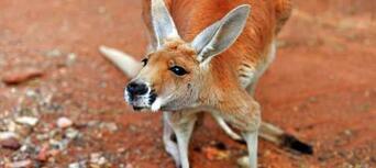 Alice Springs Desert Park Thumbnail 3