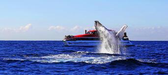 Taronga Zoo and Whale Watching Cruise Combo Thumbnail 2