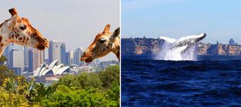 Taronga Zoo and Whale Watching Cruise Combo Thumbnail 1