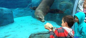 Taronga Zoo and Whale Watching Cruise Combo Thumbnail 6