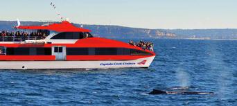 Taronga Zoo and Whale Watching Cruise Combo Thumbnail 5