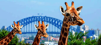 Taronga Zoo and Whale Watching Cruise Combo Thumbnail 3