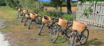 Full Day Deluxe Guided Biking Wine Tour Thumbnail 2