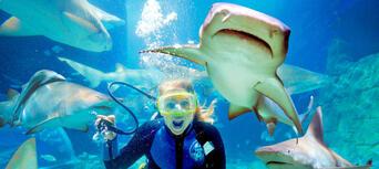 Melbourne Zoo, Aquarium & Melbourne Star Pass Thumbnail 2