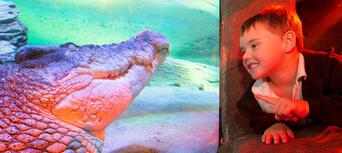 Melbourne Zoo, Aquarium & Melbourne Star Pass Thumbnail 5