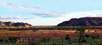 Alice Springs Noon Camel Ride Thumbnail 4