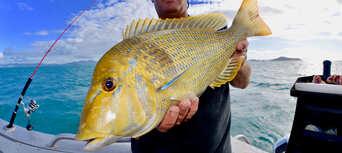 Airlie Beach Half Day Fishing Charter Thumbnail 4