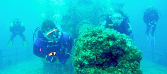 Moreton Island Scuba Diving Thumbnail 1