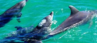 Moreton Island Scuba Diving Thumbnail 3